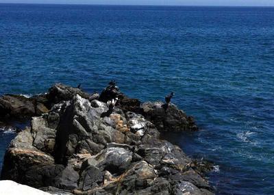 Watching the wildlife around Chile