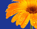 Self Help Collective Flower Banner - Left (Click me!)