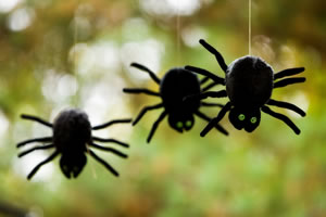 Most common fears - fear of spiders!