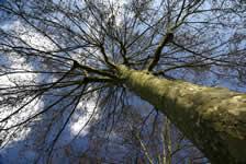 Positive attitude... of tree growth image